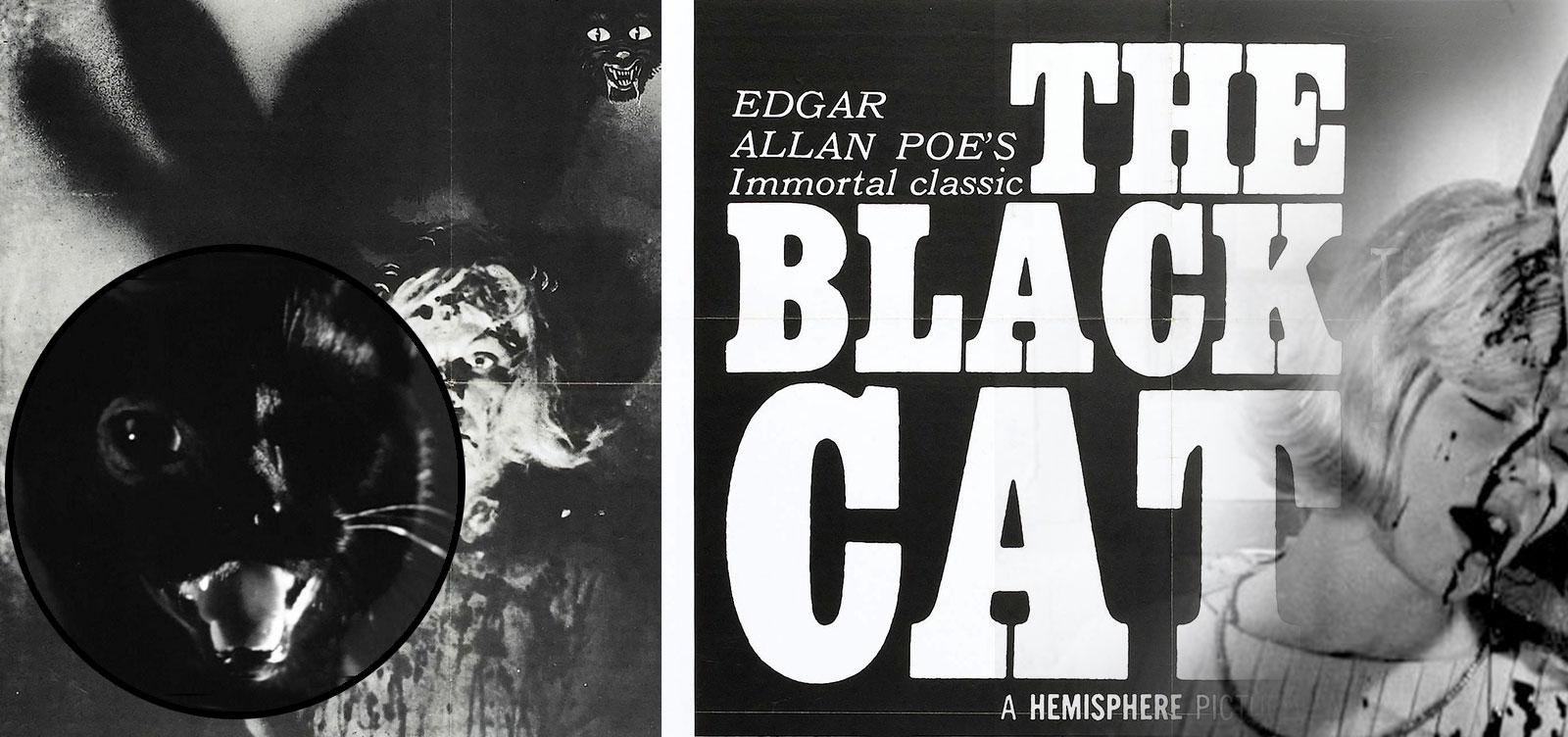 Cats_Images_BlackCat