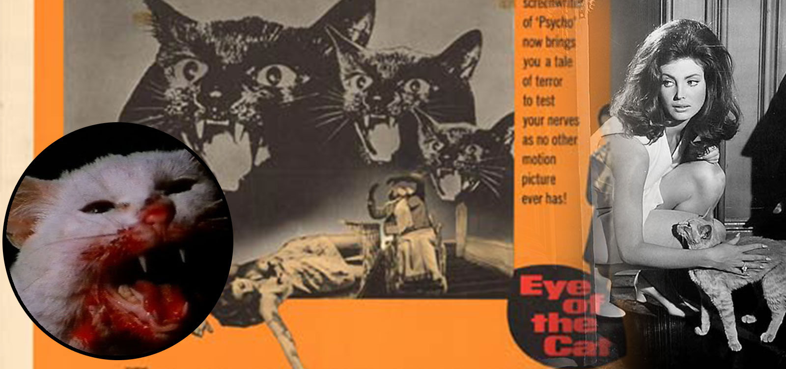 Cats_Images_EyeCat