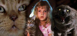 20 Horror Cats
