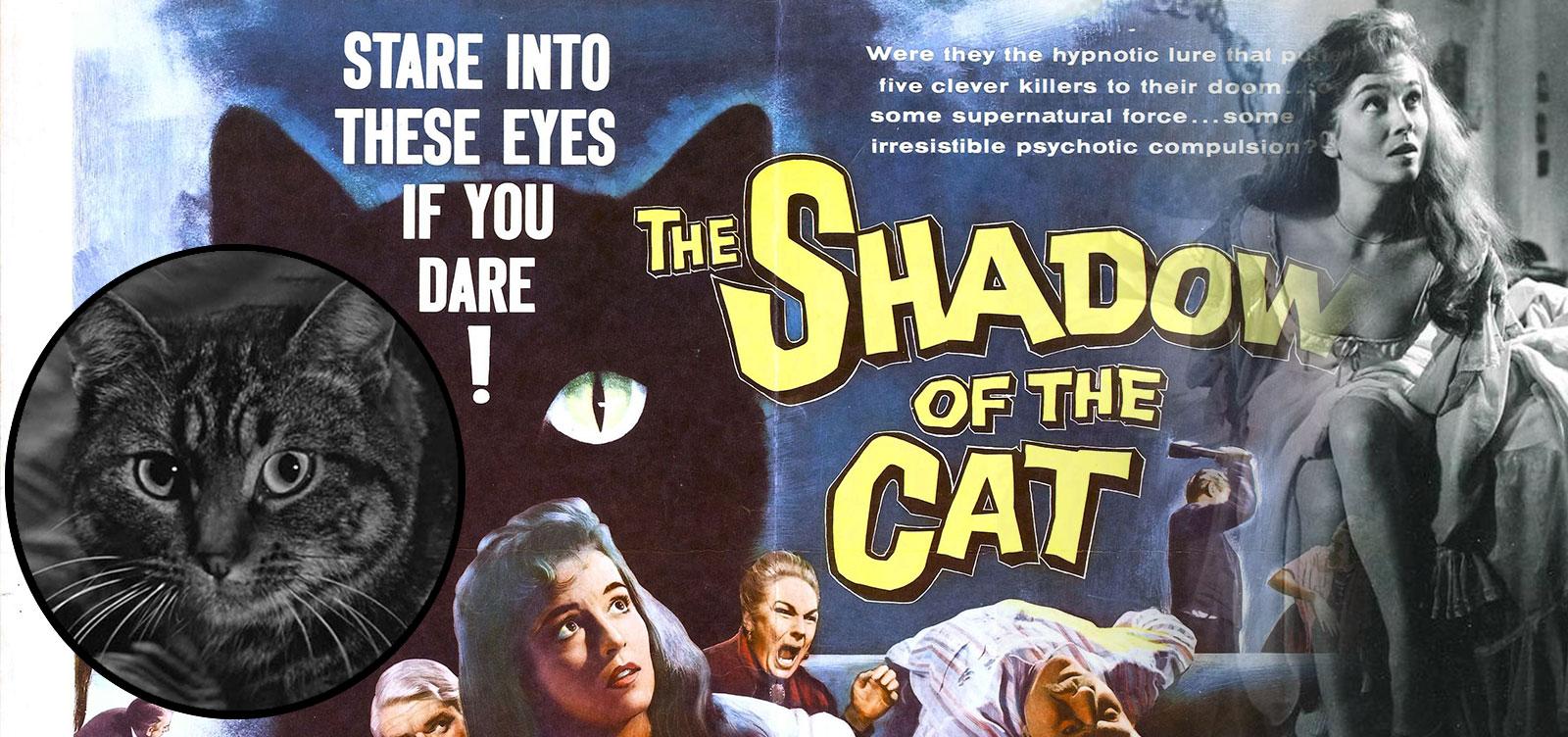 Cats_Images_shadowCat