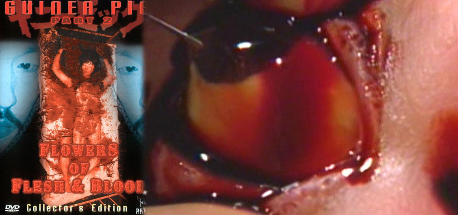 Eye_popping_Guineapig2_Review_Images_V01