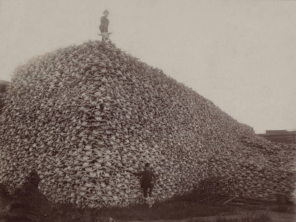 Bison Skull Mountain - Photos from History That Will Give You Nightmares