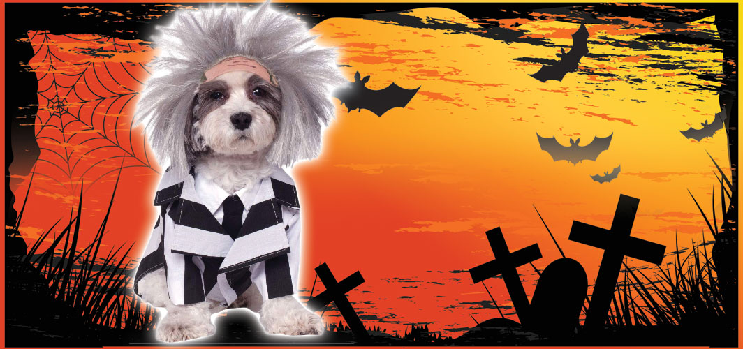 BeetleJuice  - Halloween Costumes for Pets - Terrifying 2019 Collection - Horror Land