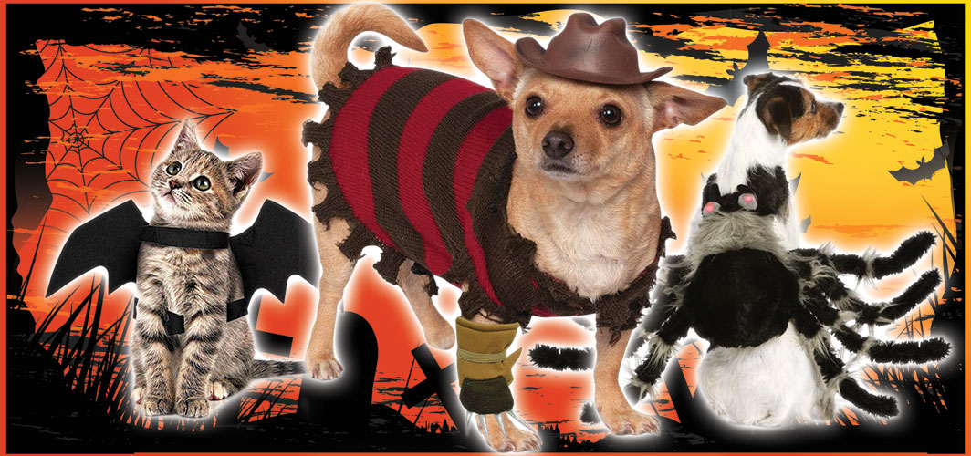 Halloween Costumes for Pets – Terrifying 2019 Collection