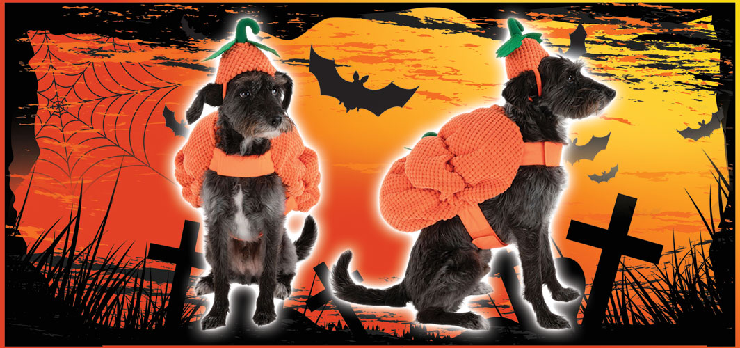 Pumpkin Dog Costume - Halloween Costumes for Pets - Terrifying 2019 Collection - Horror Land