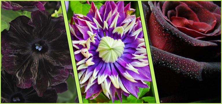 A Guide To Gothic Garden Flowers For A Nightmare-Free Garden - Horror Land