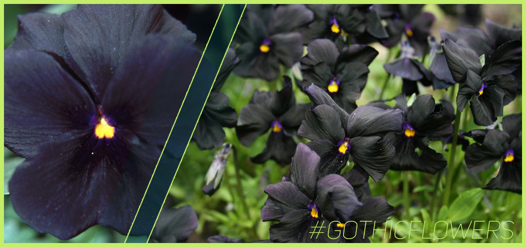 Molly Sanderson - A Guide To Gothic Garden Flowers For A Nightmare-Free Garden - Horror Land